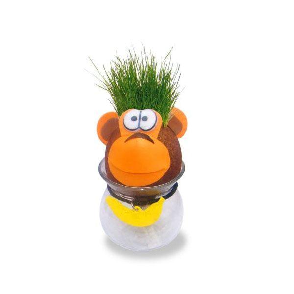 Easy To Grow Grass Head From Apollo Box