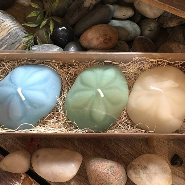 Coastal Sea Biscuit Beeswax Candles (Set Of 3)