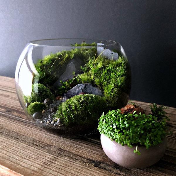 Bio Bowl Planted Moss Terrarium Apollobox