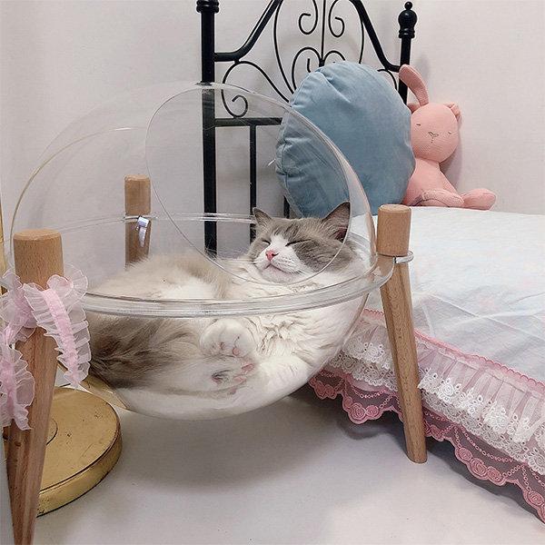 Space Capsule Transparent Cat Bed